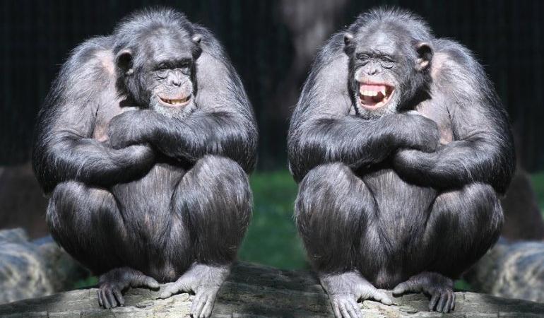 Разумное животное – кому выгодно?«Народный социализм» А.И. Рязанова